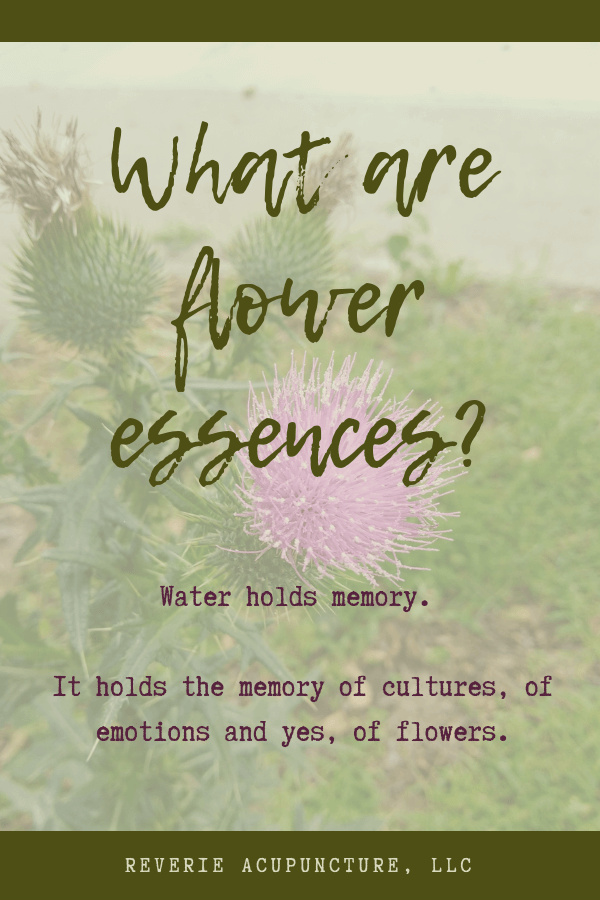 Flower essences are the memory of a flower - it's energetic imprint in water. This memory can help shift emotional and spiritual imbalances in ways more physical medicines can't. Click to read more or pin to save for later!