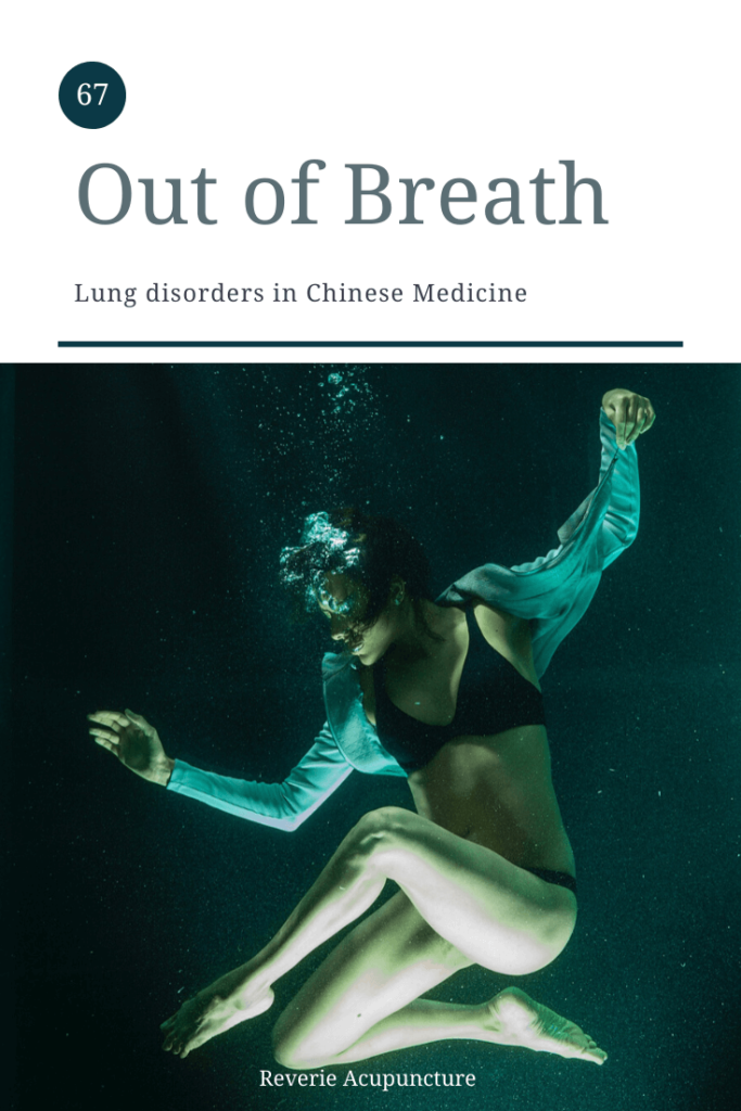 My last theory-heavy post for the month is going to be on the disharmonies of the Lung system. Like with the post on Liver disharmonies, I am going to discuss common patterns with the Lung system and what they might look like from a Western perspective as well as some general advice for preventing or coping with lung disharmonies. Photo by Engin Akyurt from Pexels